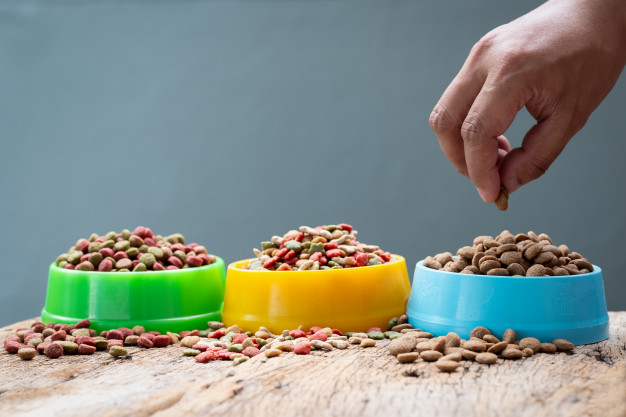 Zdrava hrana za pse je prava odločitev