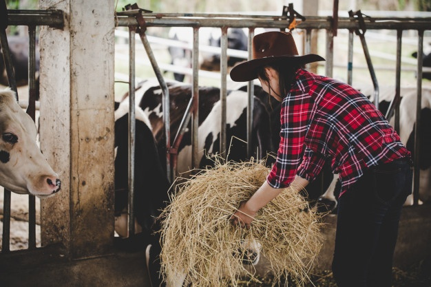Hlevska oprema za govedo za večje hleve