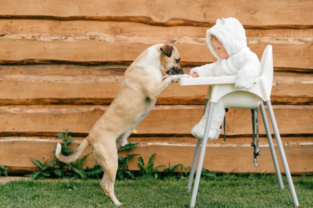 Zdrava hrana za pse mora biti vedno izbira vsakega lastnika
