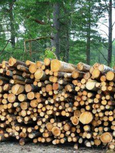Drva na dom predstavljajo alternativo lastnemu viru kakovostnega lesa