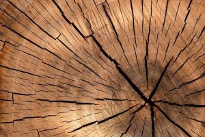 Bukova drva so na voljo v obliki polen, ki jih enostavno uporabljamo